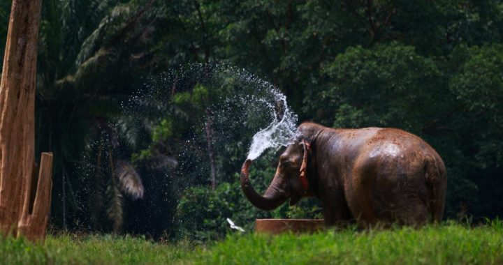 Les éléphants en Thaïlande, où aller pour les voir heureux ?