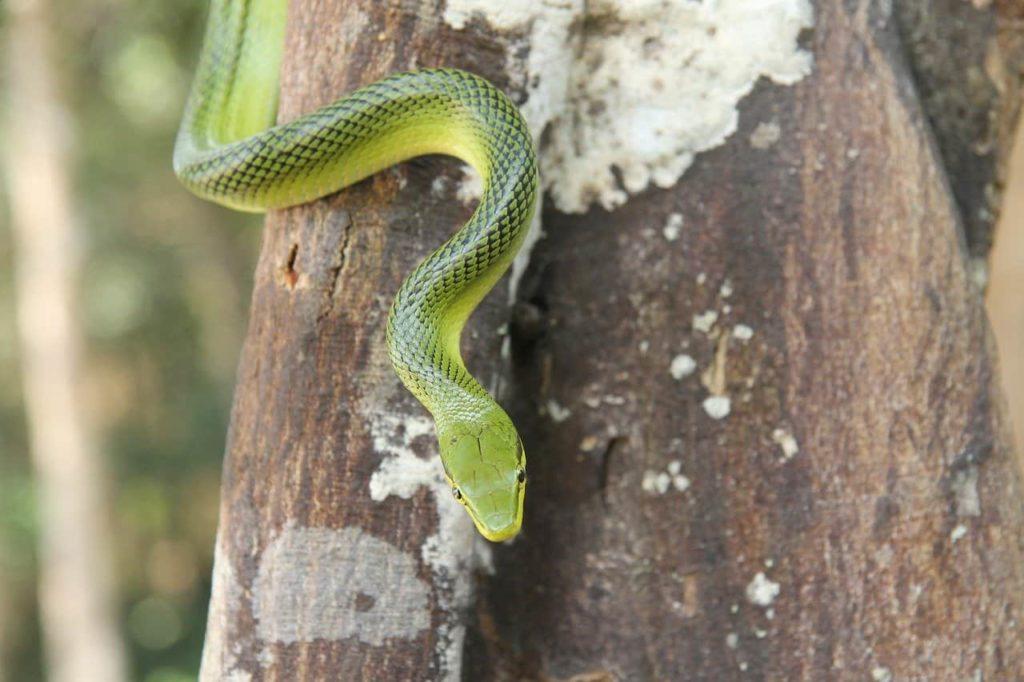 les animaux dangereux - les serpents
