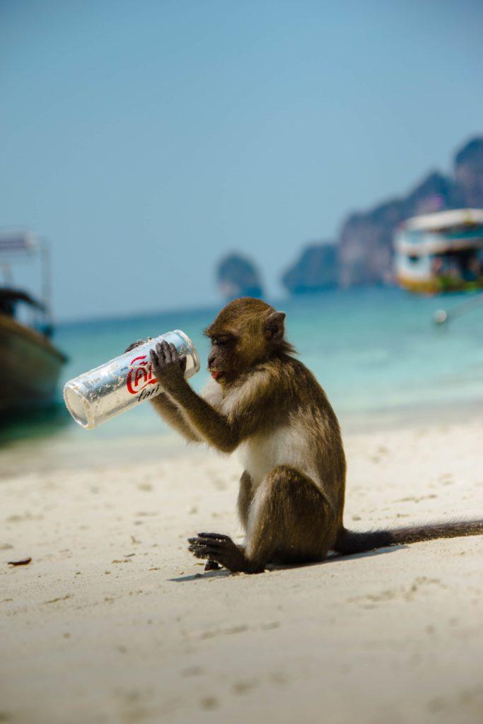 Animaux dangereux - les singes