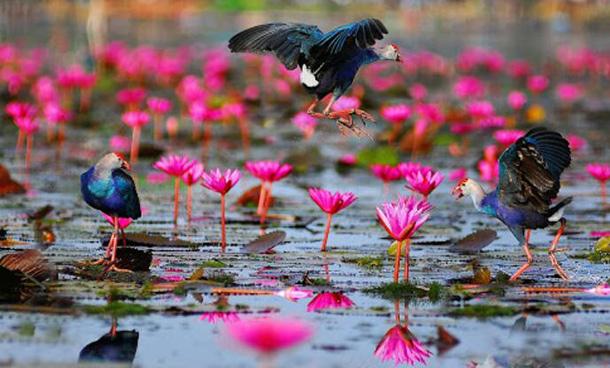 Cette image a un attribut alt vide; le nom du fichier est thale-noi-sanctuaire-des-oiseaux.jpg