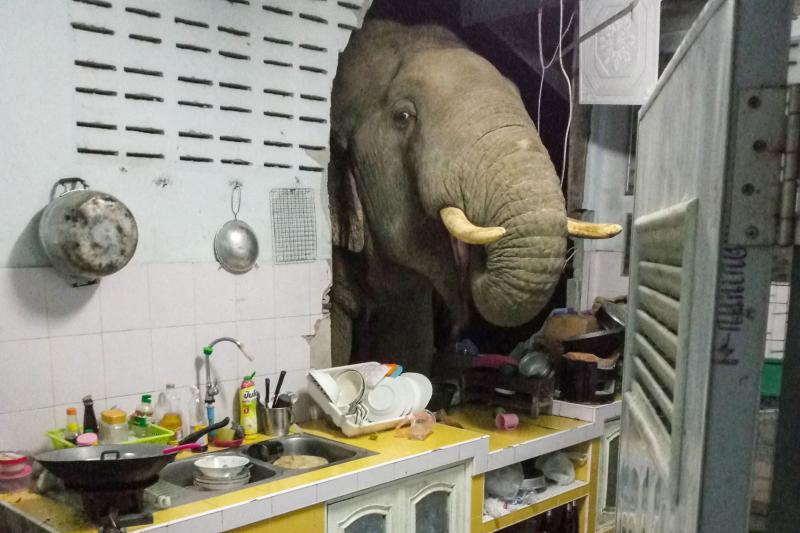 Chéri, il y a un éléphant dans la cuisine